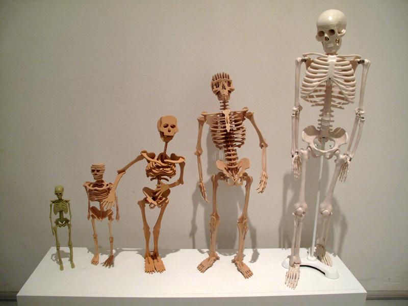 Silvia Lorenz homo-sapiens-sapiens-evolution-1