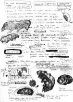 Silvia-Lorenz-Tardigrade2015_zeichnung_web