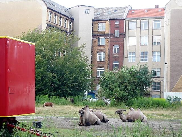 2007_07_22_Zirkus-auf-Brachfläche_ehemaliger-Todesstreifen-vor-Atelierhaus-Mengerzeile_FotoCSuhr